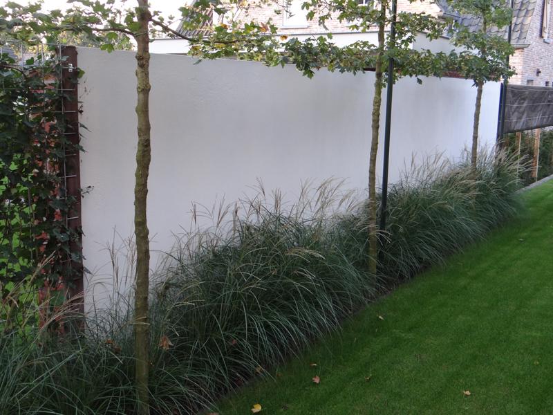 Muur Ideeen Tuin : Ideeën voor tuin groene klimop muur over blauwe hemel